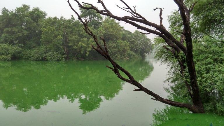 deer park lake.jpg